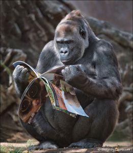 GorillaReading
